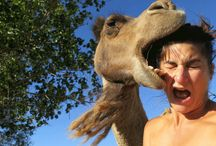 Dangerous Selfies Ever! / Dangerous selfies, or extreme selfies have become a craze, where people want to get the most unique selfie possible. Some people are thrill seekers, others are just plain stupid, let us run you through the most dangerous selfies ever.