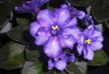 Violet Barn favorites