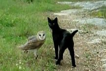 The Owls and the Pussycats / Owls and pussycats  - a marriage made in poetic heaven. / by Bee Wyeth