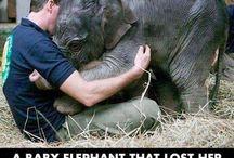 Elefant-bebisar.