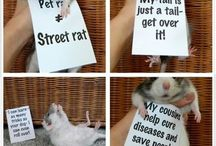 Pet Rat--one day!