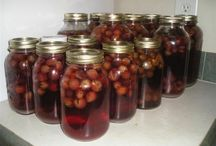 Canning Recipes & Preserving / by Ruth Taylor