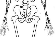 Anatómiaminták