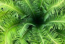 Palms / Beautiful palms