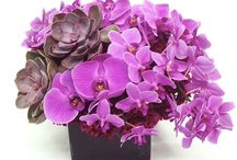 Deep Purple Flowers | NYC / https://www.gabrielawakeham.com Purple flowers are unusual and unexpected and that makes them desirable and beautiful! We have NYC's most interesting modern purple floral arrangements, available for delivery. Purple expresses a mood and is known for its richness and elegance. All purple flower arrangements are among the newer ideas in floral design and make a strong statement for events, homes, parties and celebrations. We have a large selection of purple flowers and also offer custom designs.
