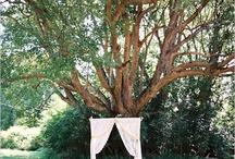 Em & Fletch / ideas for emily & fletcher's wedding / by Liz Green