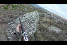 Spaniels hunting