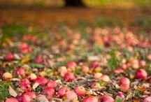 season : fall