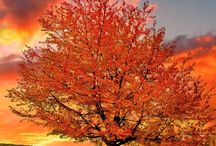 Autumn Love / by Sheryl Stephens