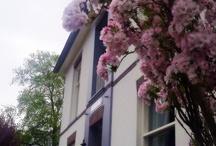 bloeiende bomen