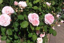 Fra min have
