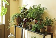 Inspired By: Decorating With Indoor Plants