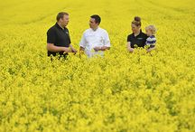 Featured in... / Links to the press Yorkshire Rapeseed Oil is featured in!