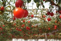 Ogród / Wszystko zwiazane z ogrodnictwem