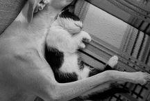 Gatos y perros / Quien dice que el perro y el gato no pueden ser amigos