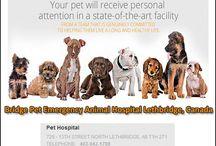Bridge Pet Hospital