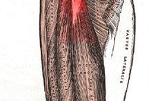 Injury / High hamstring tendinopathy (left side)