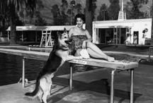 Throwback Thursday / Everybody loves Throwback Thursday. We figured we'd help dogs get in on the action by posting photographs and stories of dogs throwing it back.
