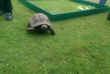 Leicester Tortoise Society / Photo's and details of events held by the Leicester Tortoise Society.
