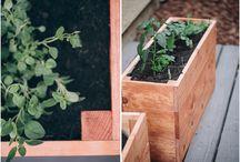 Gardening / by Kristy Delvisco