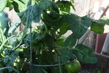 Gardening: Container / The wonderful world of container gardening, both indoors and out!