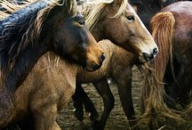 Horses 3 / by Emily Williams