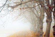 • Autumn
