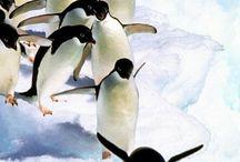 #あにまる#動物#自然界#かわいい
