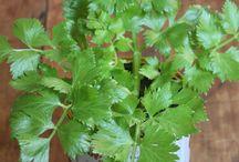 Plantas / Horta