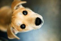 wuff dog chien 狗