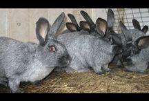кроликов разводить