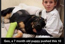 Wonderful Animals / Animals that have done things for the benefit of others.