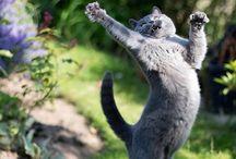 ❤ ❤ ❤  CATS, CAT LOVE, KITTIES ❤ ❤ ❤