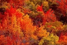All things Fall / by Mandy Passey Rasmuson