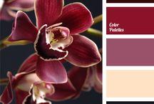 Color Palette Inspirations
