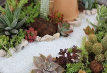 Jardins com suculentas