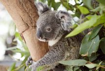 Australian Animals / Australian animal encounters