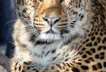 bellezze animali