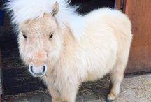 Mini Ponys