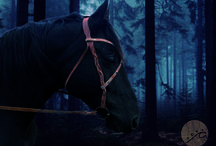 Fairy tale's horse tacks