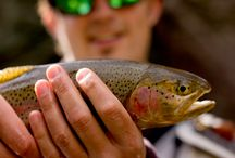 The Roaring Fork Watershed: A Fly Fishing Paradise