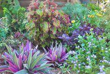 plants for panama