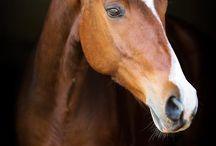 cabalos  de andera cristina