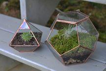Viherkasvit / plants