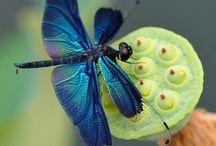 Insectes irisés