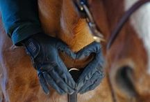 Equine Photo Shoot Ideas