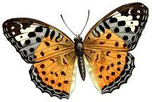motyle i inne skrzydlate
