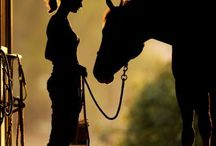 Horses / Leuke paarden foto's