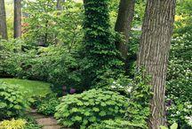 Trädgård inspiration woodland