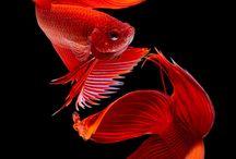 halak / halakról
